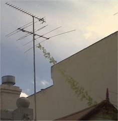Plant vine climbing a television antenna guide wire