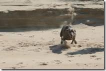Nikki running on the beach.