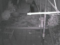 yard - night time