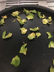 Brussels sprout leaves - oven baked