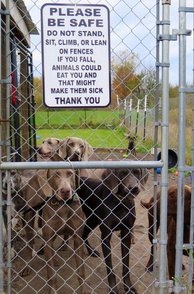 Please be safe.  Do not stand, sit, climb or lean on fences.  If you fall, animals could eat you and that might make them sick.  Thank You